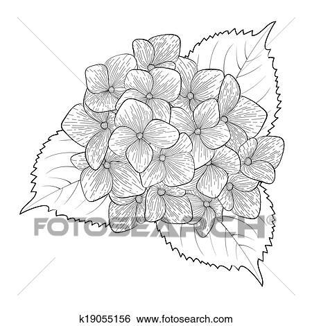 Clipart Monochroom Zwart Wit Bloem Hortensia Geisoleerde