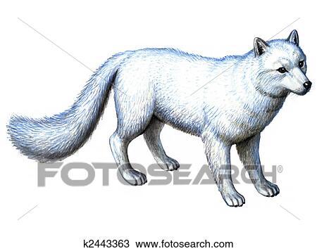 Dibujo - animal, zorro ártico k2443363 - Buscar Clip Art ...