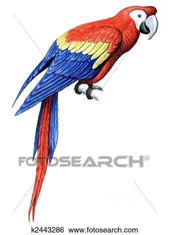 stock illustration of bird parrot macaw k2443286 search clip art rh fotosearch com Snake Clip Art Bird Art