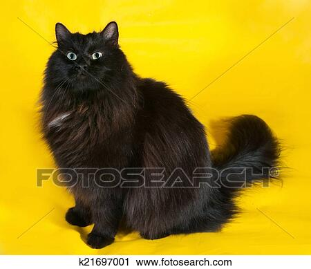 Lanuginoso Gatto Nero Con Occhi Verdi Seduta Su Giallo