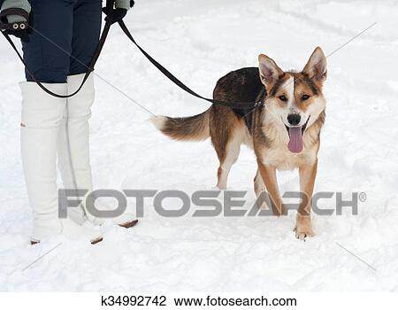 Stock Foto Rot Schwarz Weiß Mischlingshund Hund Gleichfalls