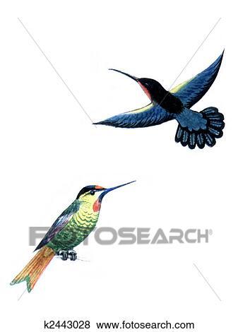 Gekleurde Tekening Op De Papier Vogel Kolibrie Geisoleerde