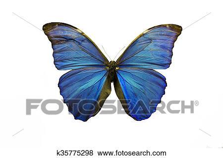Bello Blu Magia Farfalla Isolare Su Il Sfondo Bianco Archivio