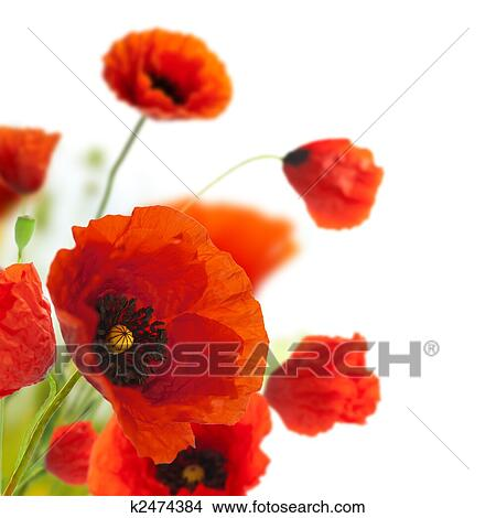 Stock photo of floral design decoration flowers poppies border stock photo floral design decoration flowers poppies border corner fotosearch mightylinksfo