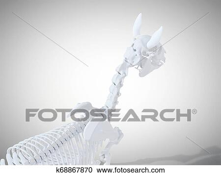 The horse skeletal system Clipart