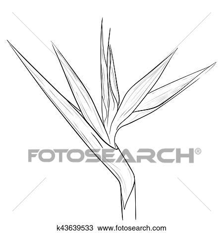 Clipart Oiseau Paradis Fleur Dans Croquis Style K43639533