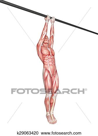Stock Illustrations Of Workout Close Grip Chin Up K29063420