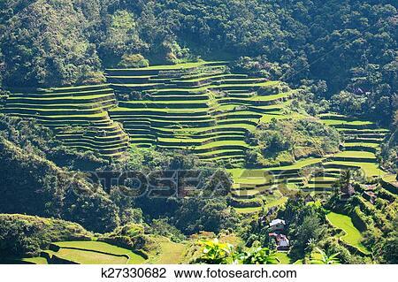 Arroz Terrazas En El Filipinas Arroz Cultivo En El Norte De El Filipinas Batad Banaue Colección De Imágen