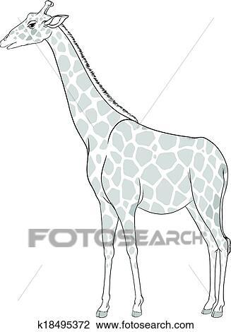 Clipart Of A Sketch Of A Giraffe K18495372