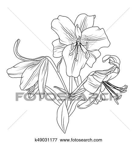 Fleurir Lis Fleurs Bouquet Isolé Noir Blanc Clipart