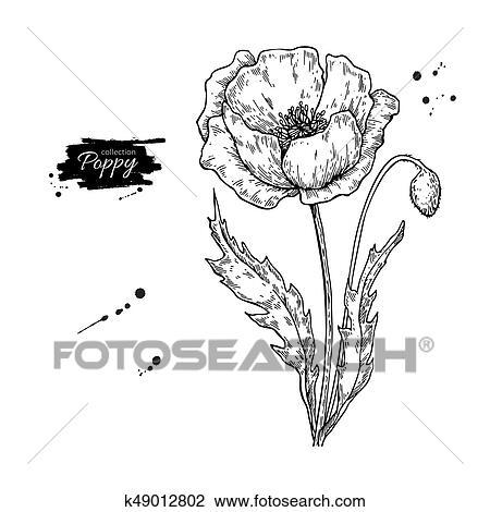 Pavot Fleur Vecteur Dessin Set Isolé Sauvage Plante Et Leaves Clipart