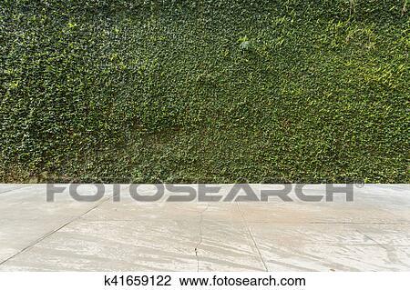 Stock Foto Betonieren Boden Und Grunes Blatt Efeu Pflanze