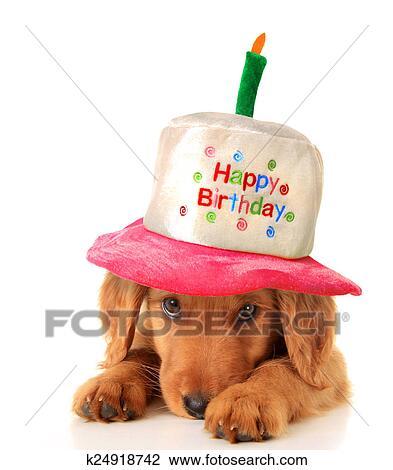 Archivio Fotografico Buon Compleanno Cucciolo K24918742 Cerca