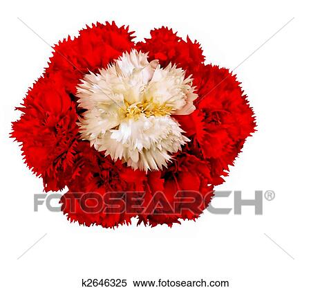 Stock Image Of White Carnation Surrounded With Red Carnation Flowers