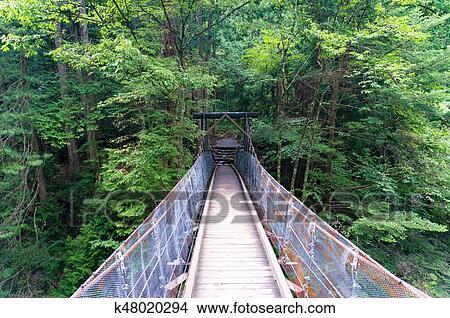 5199519bfe044 Banco de Imagem - madeira, ponte suspensão, em, a, floresta ...