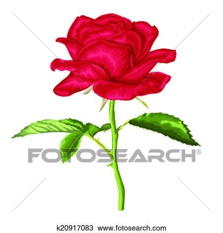 Beau Rose Rouge à Longue Tige Et Feuilles à Les Effet De A Aquarelle Dessin Isolé Blanc Clipart