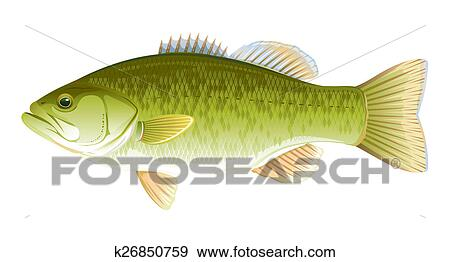 Stock Illustration Of Fish Largemouth Bass K26850759 Search Vector