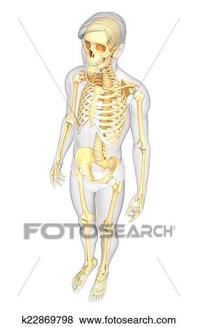Pictures Of Human Skeleton Side View K22869798 Search Stock Photos