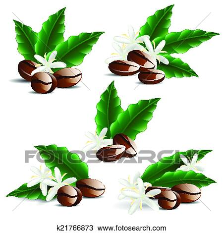Clipart of single coffee bean with leaf isolated on white ...