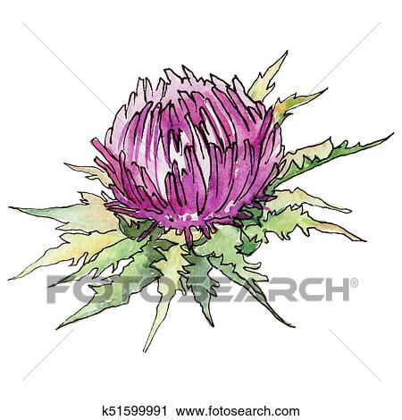 Clipart - Wildflower thistle flower in a watercolor style isolated.. Fotosearch - Search Clip