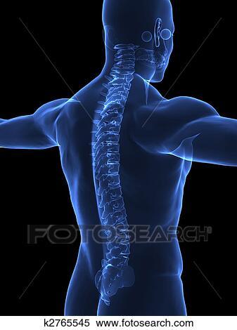 Colección de ilustraciones - espina dorsal humana, en, radiografía ...