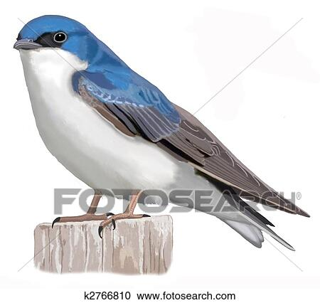 Stock Illustrations Of Tree Swallow K2766810