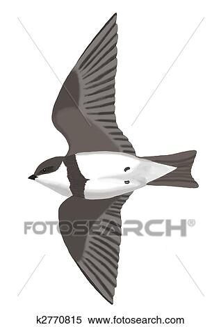 Stock Illustration Of Bank Swallow K2770815