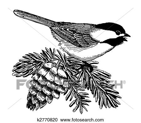 stock illustrations of black capped chickadee k2770820 search rh fotosearch com Chickadee Bird chickadee clipart black and white