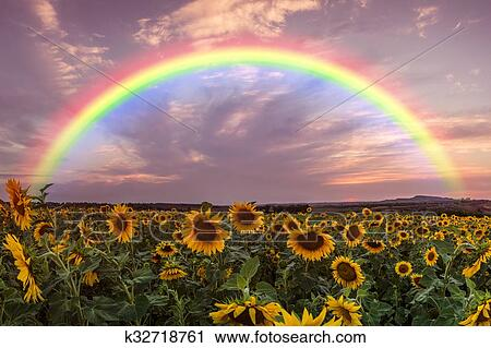 Archivio fotografico - paesaggio, con, girasole, e, arcobaleno ...