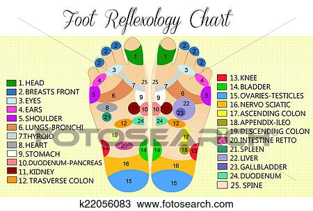Drawing Of Foot Reflexology Chart K22056083 Search Clipart