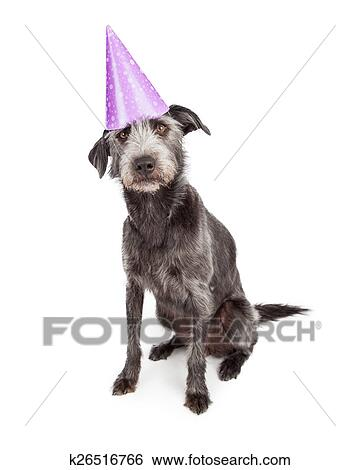 Cute Terrier Dog Wearing Purple Birthday Party Hat