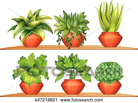 Different Types Of Plants In Pots Clipart K47218821 Fotosearch