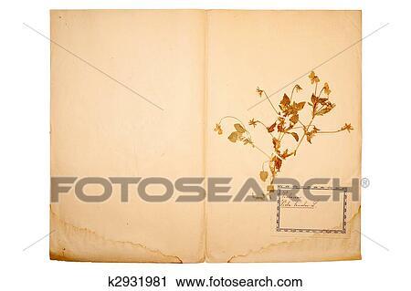 Banques De Photographies Fleur Sechee Sur Vieux Alle Jaune