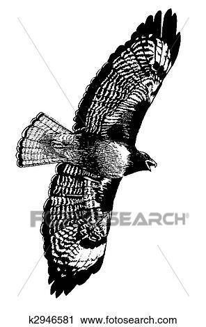 Clipart - halcón seguido por red k2946581 - Buscar Clip Art ...