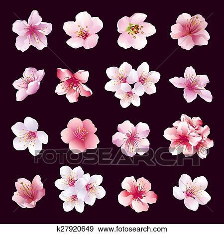 Ensemble De Fleurs De Cerisier Isolated Eps Clipart