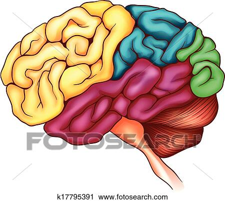 The human brain Clipart   k17795391   Fotosearch (450 x 403 Pixel)