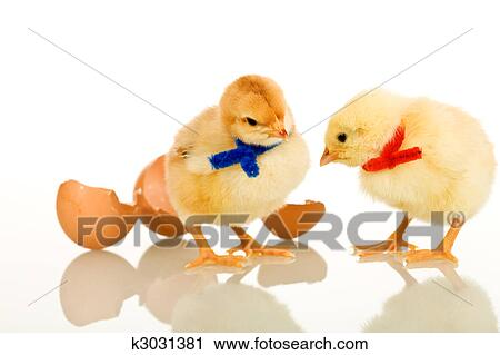 Stock Photography Of Easter Party Baby Chickens Isolated With