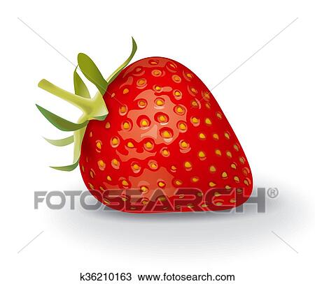 strawberry drawing k36210163 fotosearch https www fotosearch com csp303 k36210163