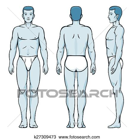 Clipart of Man body model. Front, back and side human poses ...
