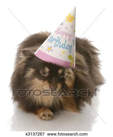 Picture Of Birthday Dog
