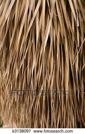 Bild Getrocknete Palmenblatter Tropische Haus Dach K3138097