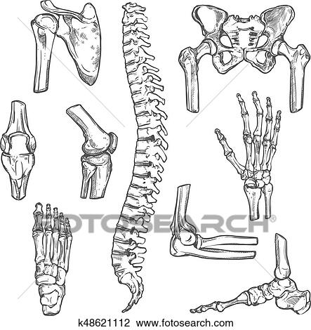 Clipart Of Vector Sketch Icons Of Human Body Bones And Joints
