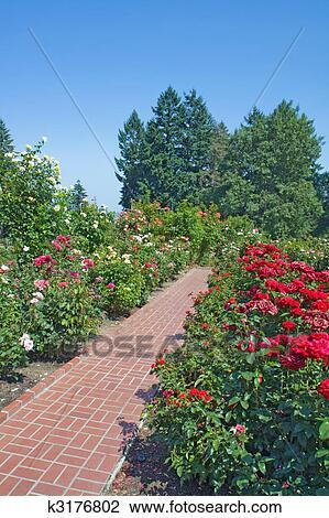 Colecci n de foto rosas rboles de hoja perenne y for Arboles ornamentales de jardin de hoja perenne