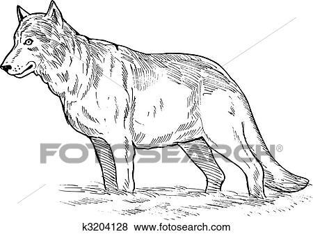 図画 の A 灰色の オオカミ イラスト K3204128 Fotosearch