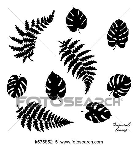 Vector Illustration Of Fern And Monstera Leaves Clipart K57585215 Fotosearch One of those opened normally, but the edges became hi i recently (a month or two ago) bought my first monstera plant. vector illustration of fern and