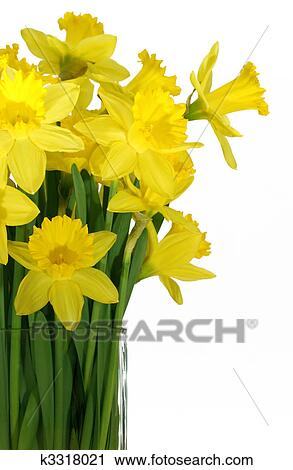 Stock Photography Of Daffodils In A Square Glass Vase K3318021