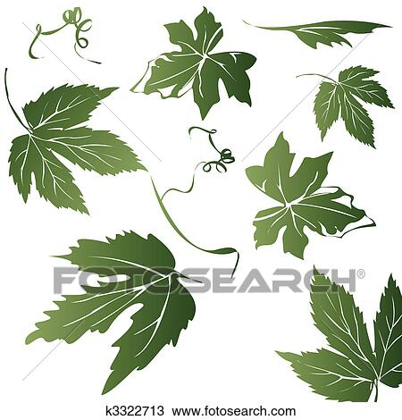 Grape Leaves Drawing K3322713 Fotosearch