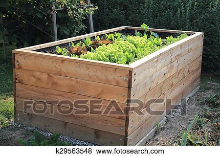 Bilder Hochbeet In A Kleingarten K29563548 Suche Stockfotos