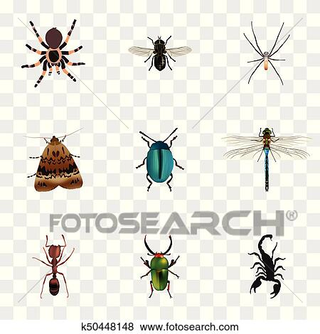 Realistic Butterfly, Insect, Emmet And Other Vector Elements  Set Of Bug  Realistic Symbols Also Includes Tarantula, Ant, Moth Objects  Clip Art