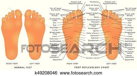 Foot Reflexology Chart Reflex Zones Of The Feet